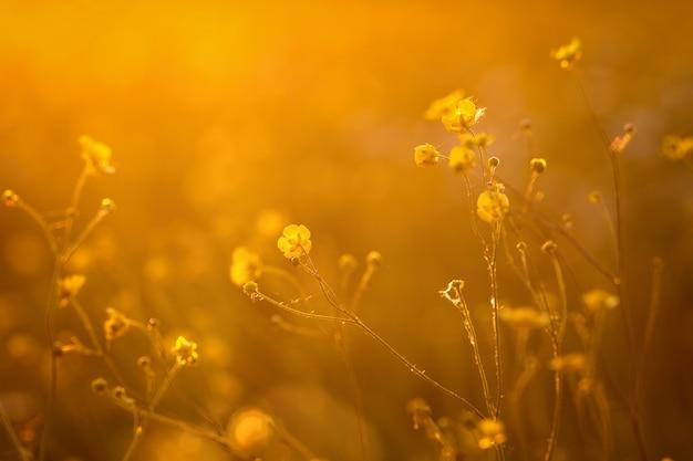 Belles fleurs dans le rétro-éclairage du coucher du soleil