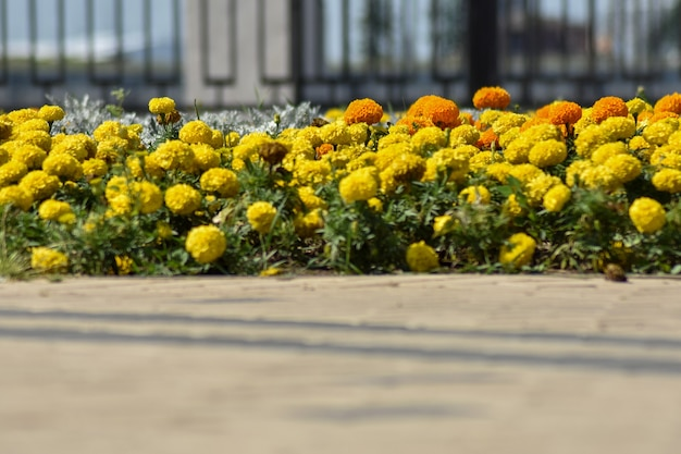De belles fleurs délicates poussent dans le jardin