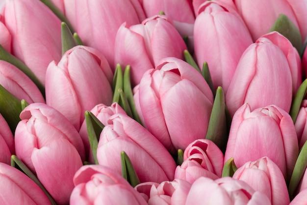 Belles fleurs éléments de conception isolés. floraison, printemps, été.