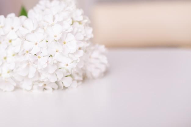 Belles fleurs d'été sur fond blanc avec place pour le texte