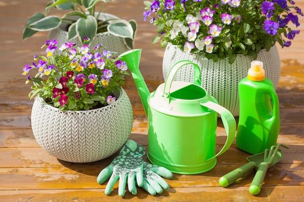 Belles fleurs d'été de pensée dans le jardin, arrosoir, outils