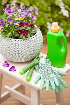 Belles fleurs d'été de pensée dans le jardin, engrais et gants