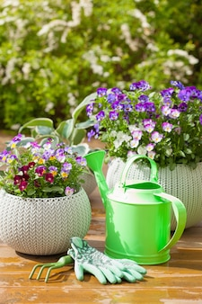 Belles fleurs d'été de pensée dans le jardin et des gants d'arrosoir