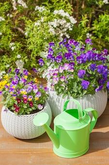 Belles fleurs d'été de pensée dans des pots de fleurs dans le jardin