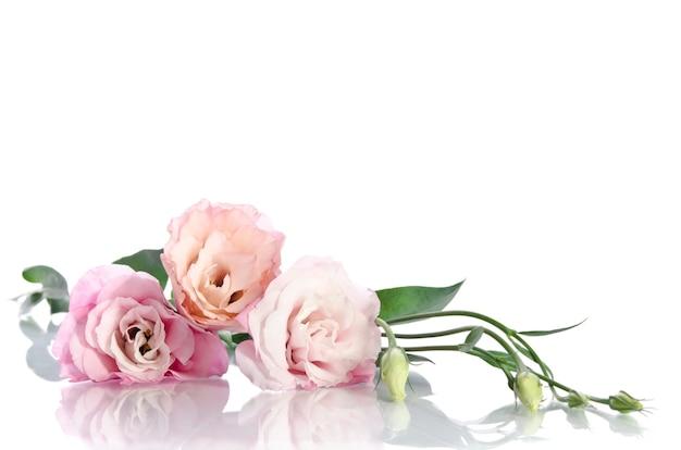 Belles fleurs d'eustoma avec des feuilles et des bourgeons sur blanc