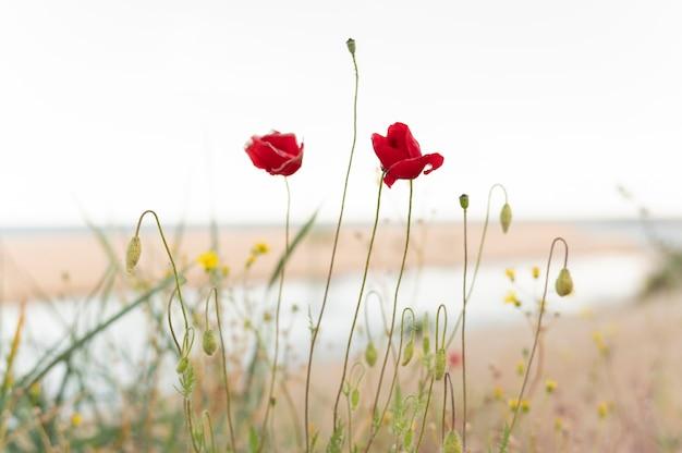 De belles fleurs à l'extérieur