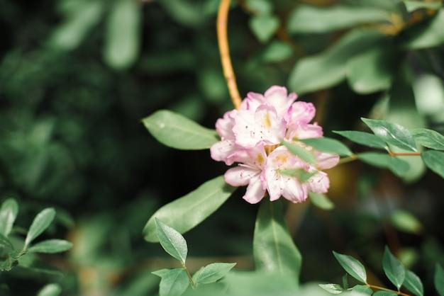 Belles fleurs avec des feuilles vertes se bouchent