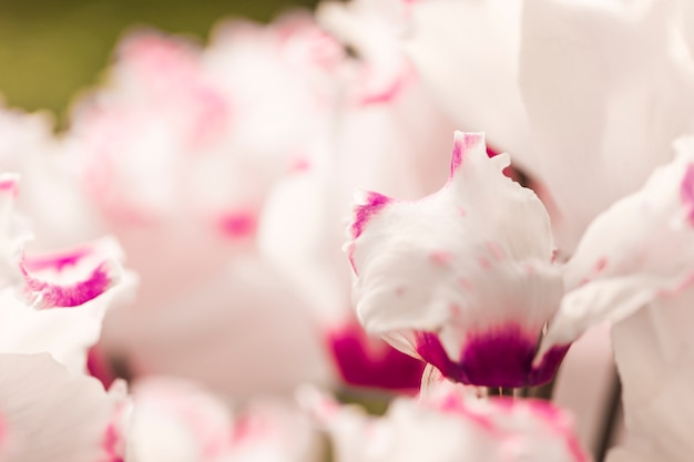 Belles fleurs fraîches blanches et violettes