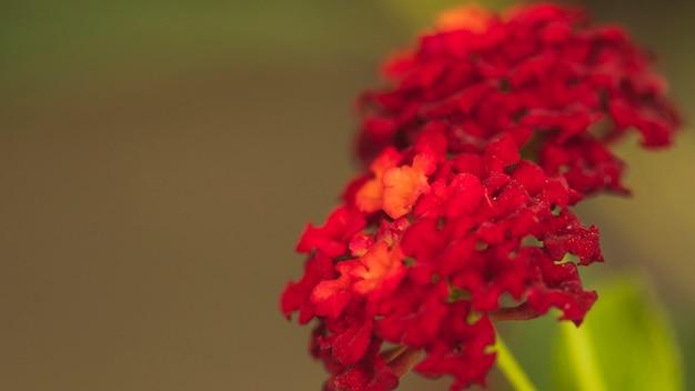 Belles fleurs fraîches vineuses