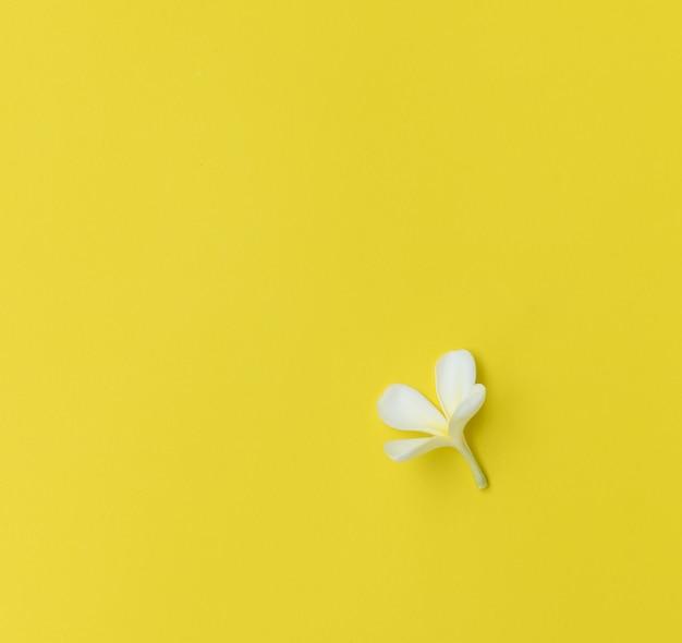 Belles fleurs de frangipanier dans un bol blanc avec des pierres zen noires sur une table en bois avec fond de mur de brique