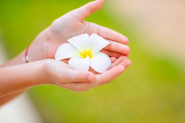 Belles fleurs de frangipanier en mains