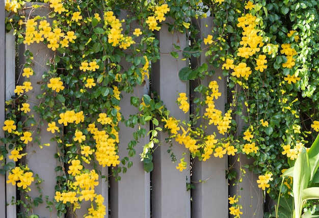 Belles fleurs jaunes aux feuilles vertes
