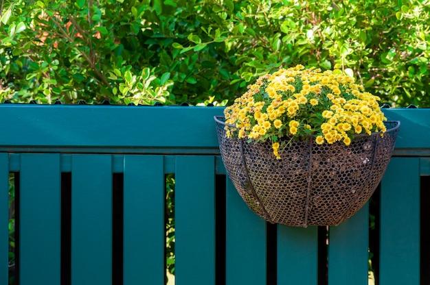 Belles fleurs jaunes dans des pots accrochés à une clôture en bois.