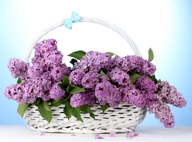 Belles fleurs lilas dans le panier sur bleu