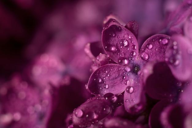 Belles fleurs lilas pourpres mise au point sélective.
