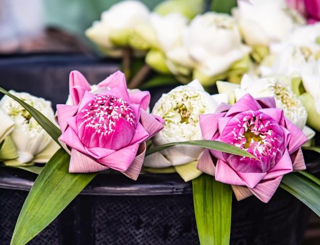 De belles fleurs de lotus pour faire du mérite le jour du bouddha