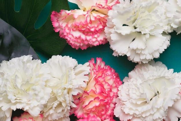 Belles fleurs d'oeillets blancs et roses