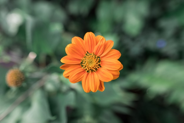 Belles fleurs orange