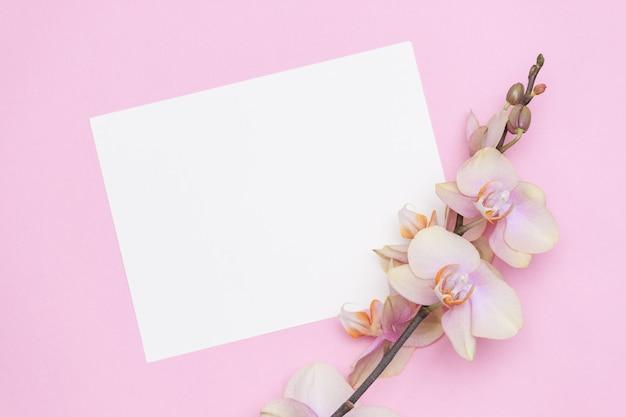 Belles fleurs d'orchidées phalaenopsis sur fond rose pastel