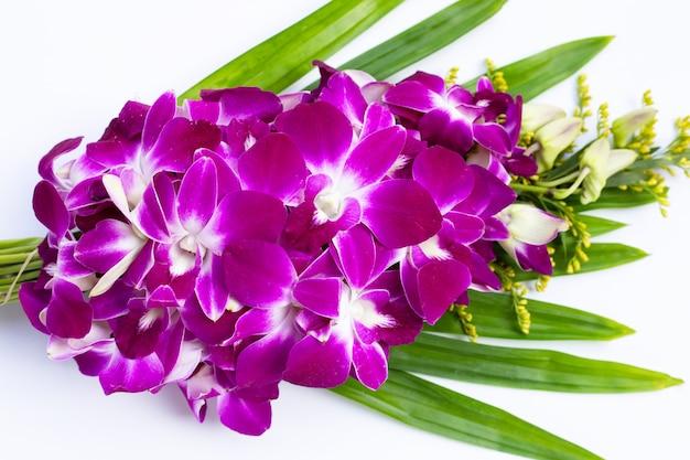 Belles fleurs d'orchidées violettes sur fond blanc.