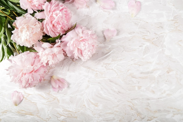 De belles fleurs de pivoine fraîches