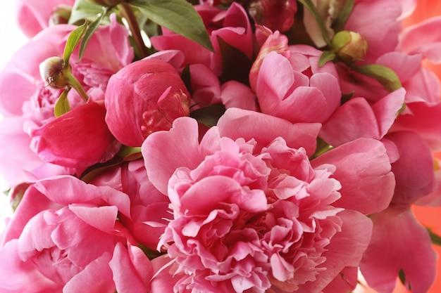 Belles fleurs de pivoine, gros plan
