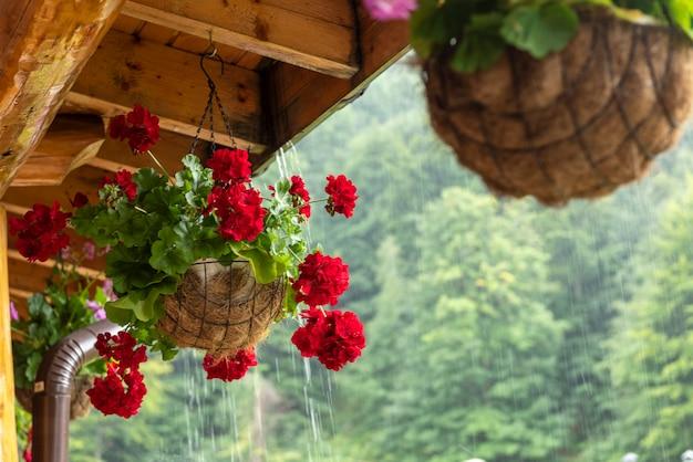 Belles fleurs en pot, à l'extérieur, mise au point sélective