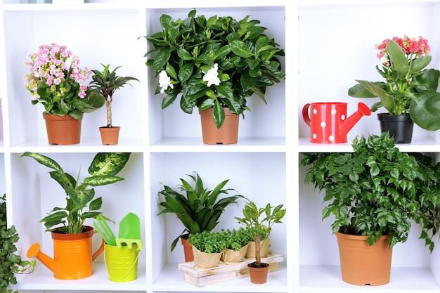 Belles fleurs en pots sur des étagères blanches