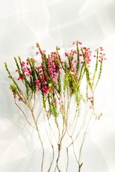 Belles fleurs pour la décoration