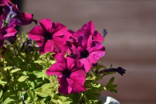 De belles fleurs poussent dans le jardin