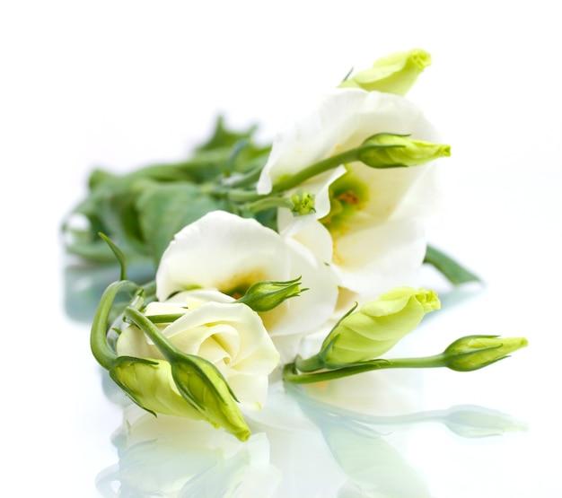 Belles fleurs de printemps isolées sur blanc