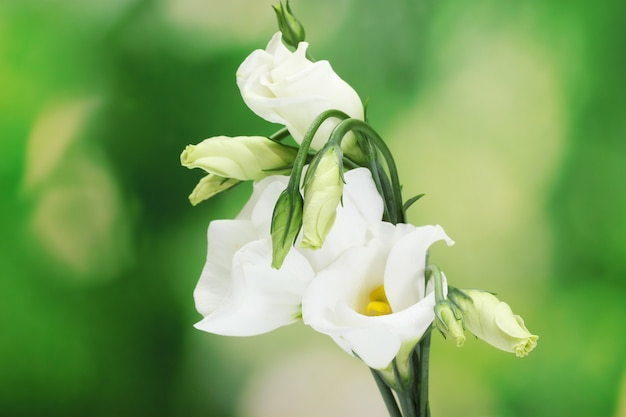 Belles fleurs de printemps sur une surface verte