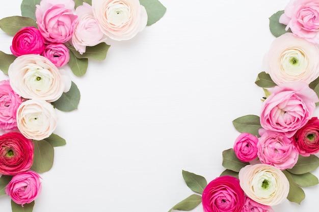 Belles fleurs de renoncules colorées sur fond blanc. carte de voeux saint valentin.