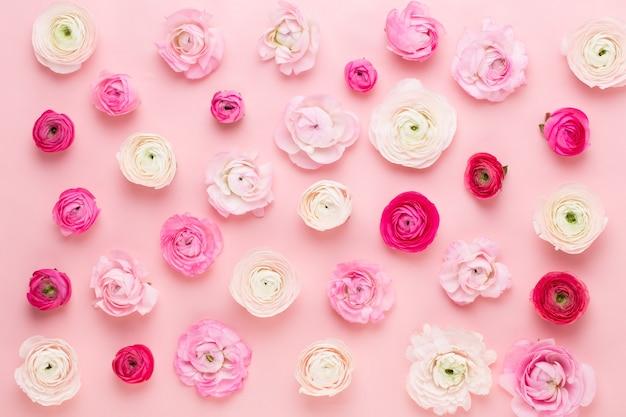 Belles fleurs de renoncules colorées sur une table rose