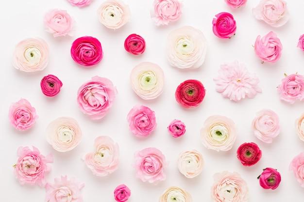 Belles fleurs de renoncules colorées.