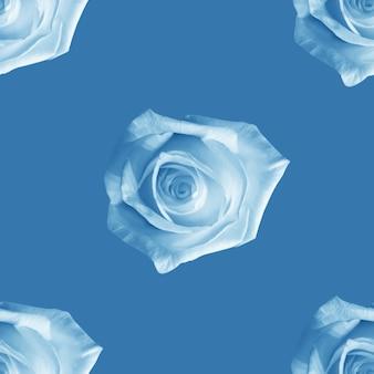 Belles fleurs roses blanches. modèle sans couture de roses en fleurs. fond naturel floral.