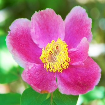 Belles fleurs roses sur le champ vert