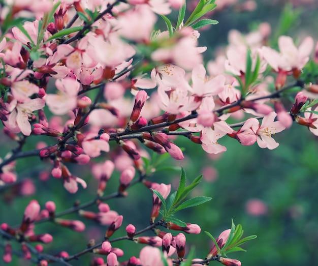 Belles fleurs roses dans le jardin