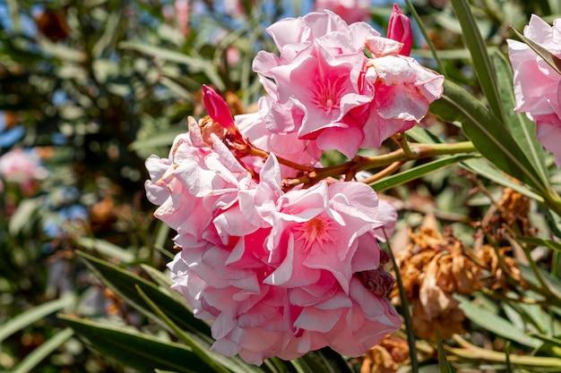 Belles fleurs roses exotiques