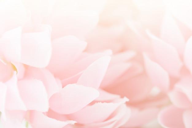 De belles fleurs roses faites avec des filtres de couleur, une couleur douce et un style flou pour le fond