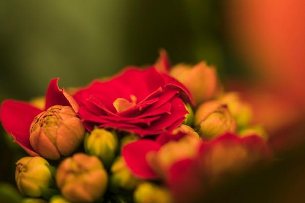 Belles fleurs rouges fraîches