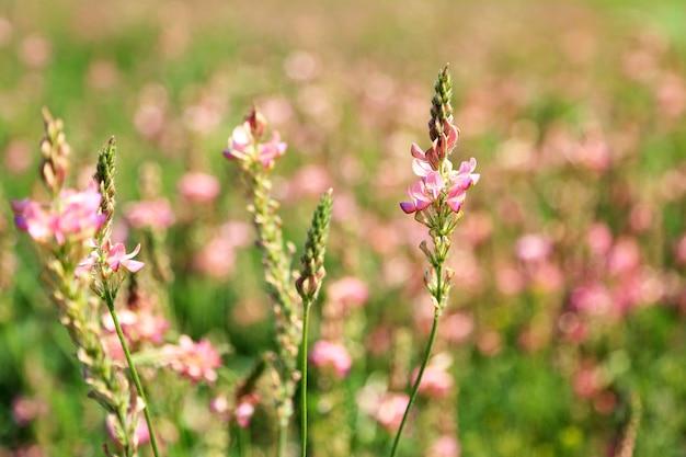 Belles fleurs sauvages dans le domaine