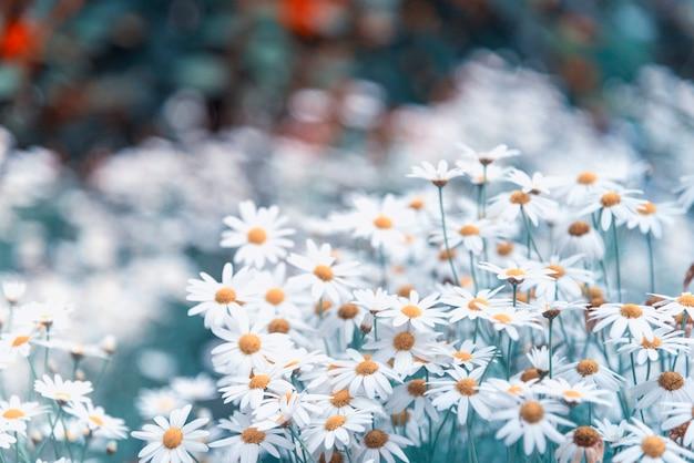 Belles fleurs sauvages, filtre d'image vintage