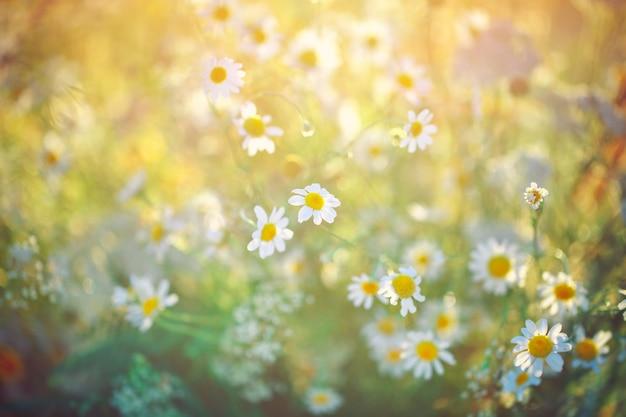 Belles fleurs sauvages.