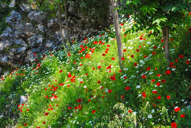 De belles fleurs sont toujours des vacances