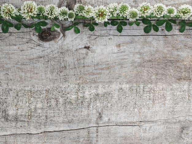 Belles fleurs de trèfle couché sur des planches