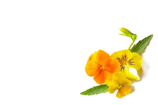 Belles fleurs violettes jaunes, coin floral disposé sur fond blanc, espace copie