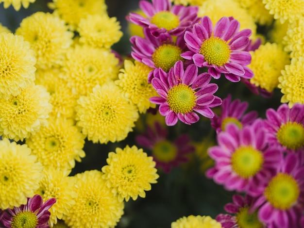 Belles fleurs violettes et jaunes
