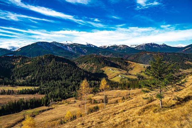 Belles forêts colorées couvrant les montagnes des carpates