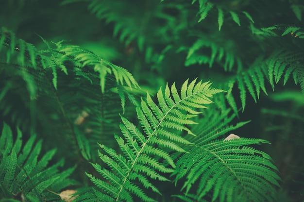 Belles fougères feuilles feuillage vert